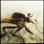 caleb_messer_hipstamatic_insect_15