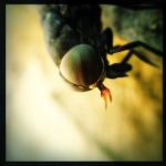 caleb_messer_hipstamatic_insect_18