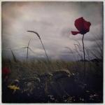 therese_cherton_c135_10