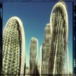 harvey_licht_portfolio_roped-cactus