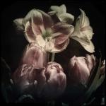 therese_cherton_portfolio_hipstamatic_fleurs_001