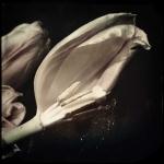 therese_cherton_portfolio_hipstamatic_fleurs_002