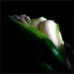 therese_cherton_portfolio_hipstamatic_fleurs_007