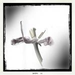 therese_cherton_portfolio_hipstamatic_fleurs_016