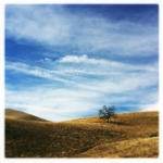 17_sardinia_little-tree