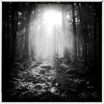 Q-Sakamaki-Suicide-Forest-01