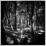 Q-Sakamaki-Suicide-Forest-06