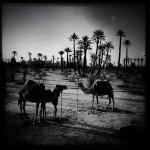 Valery-Hache-Marrakech-17