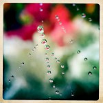 Jill-Lian-Morning-Light-04
