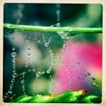 Jill-Lian-Morning-Light-06