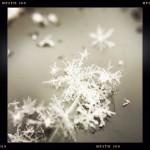 Jill-Lian-Morning-Light-19