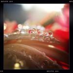 Jill-Lian-Morning-Light-20