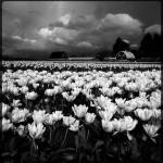lee-atwell-sacred-lands-portfolio-06