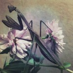 kathleen-magner-rios-uneasy-dreams-17