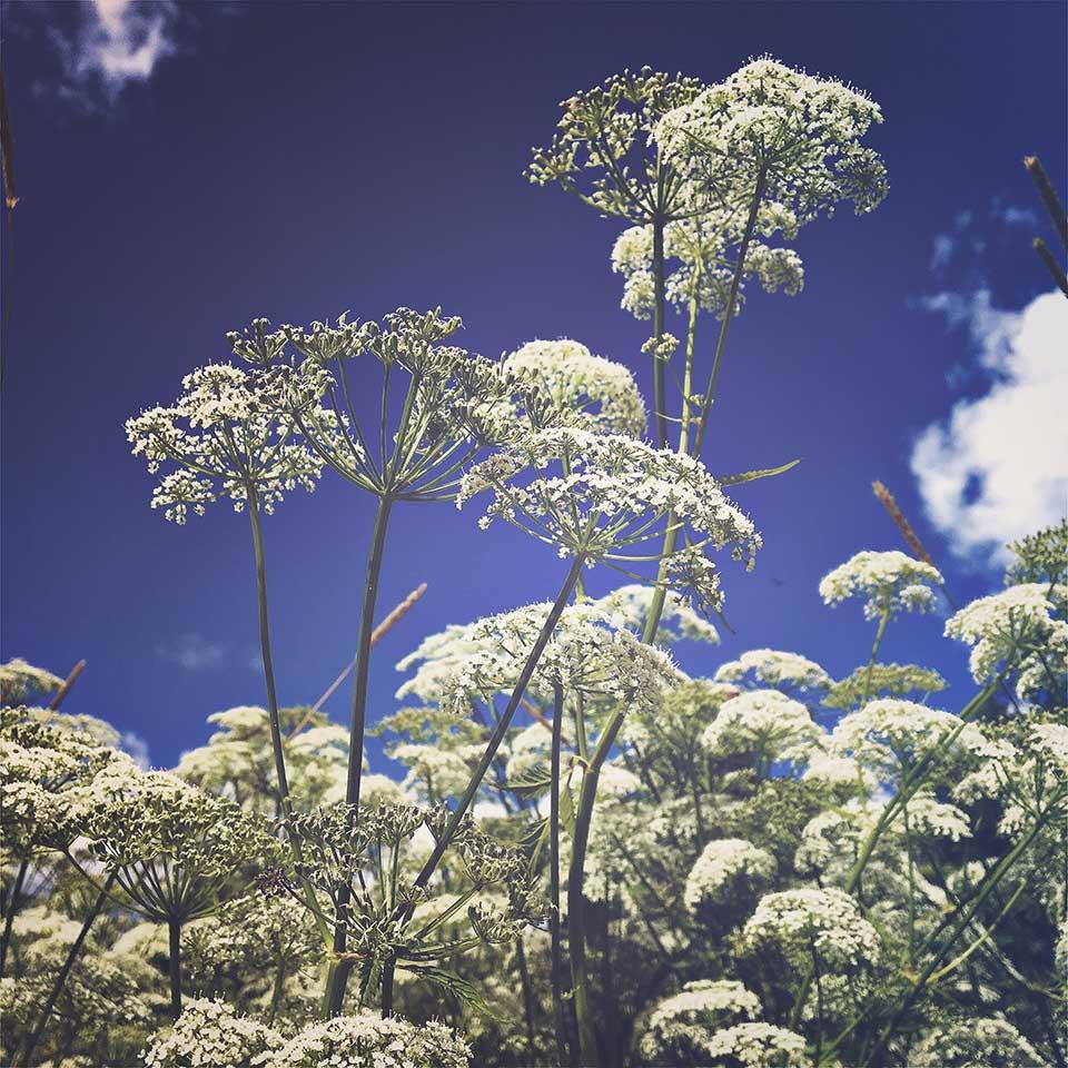 Kristiina-Hakovirta-Flowers-02