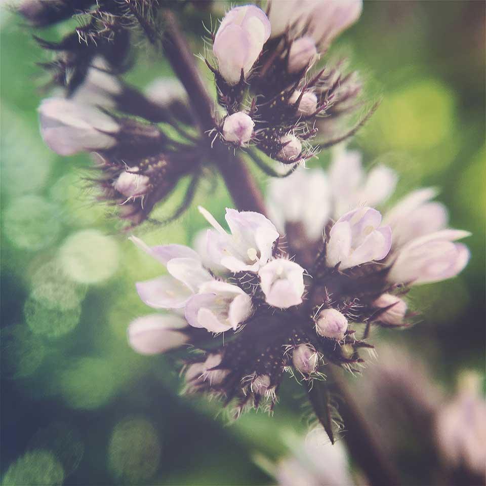 Kristiina-Hakovirta-Flowers-03