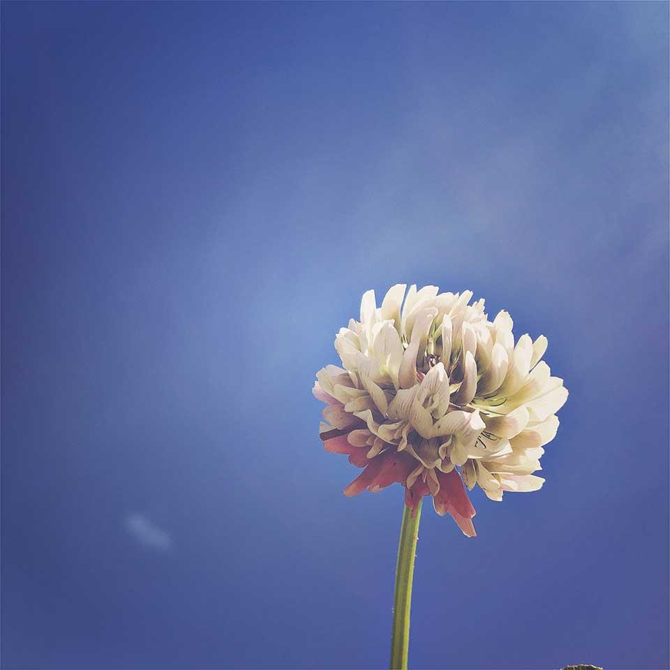 Kristiina-Hakovirta-Flowers-05