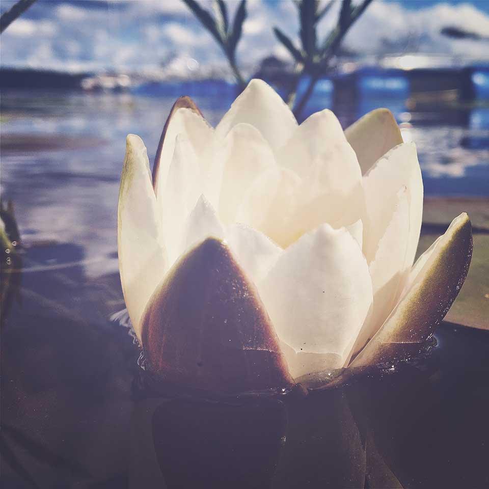 Kristiina-Hakovirta-Flowers-06