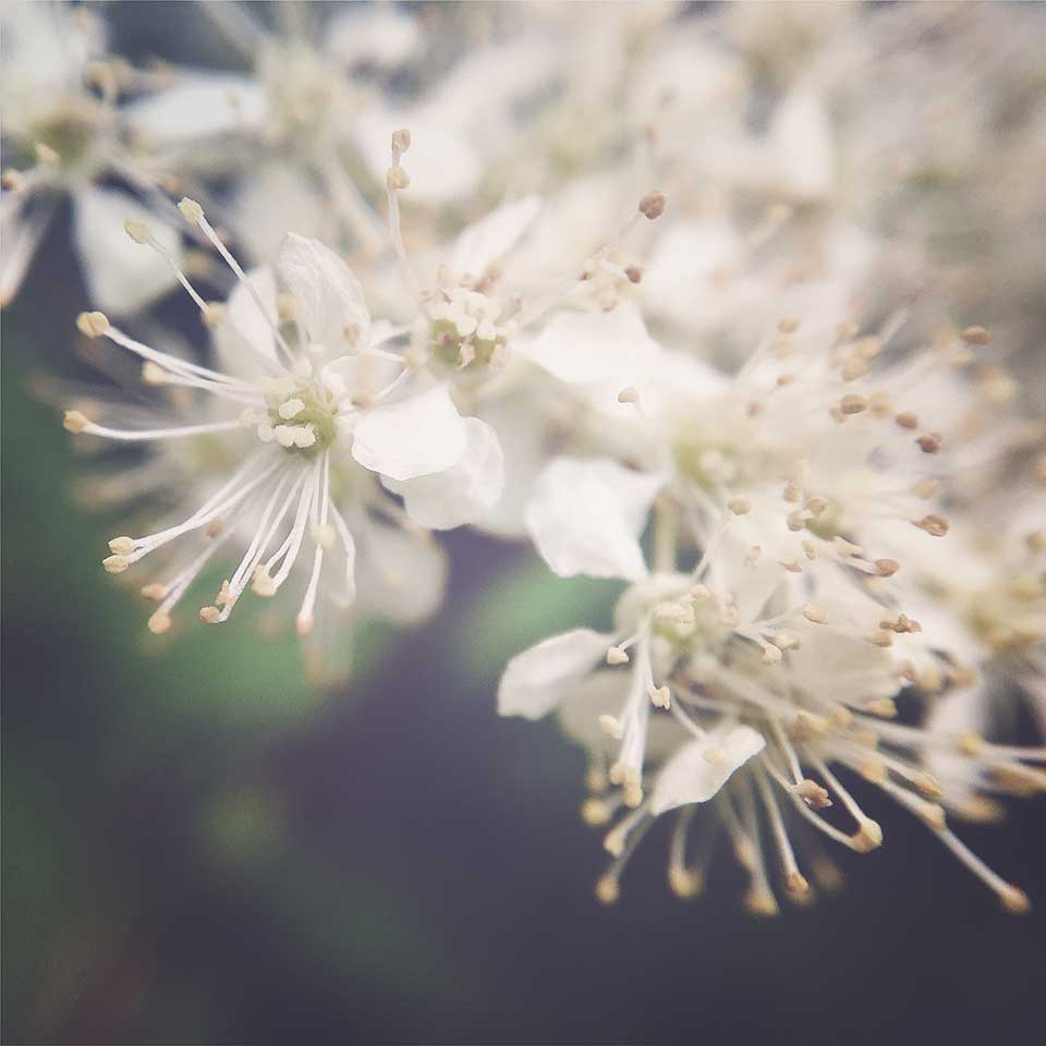 Kristiina-Hakovirta-Flowers-16