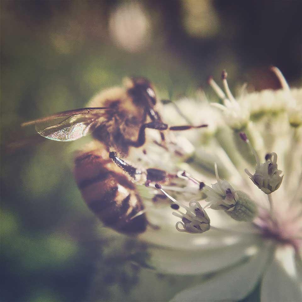 Kristiina-Hakovirta-Flowers-17