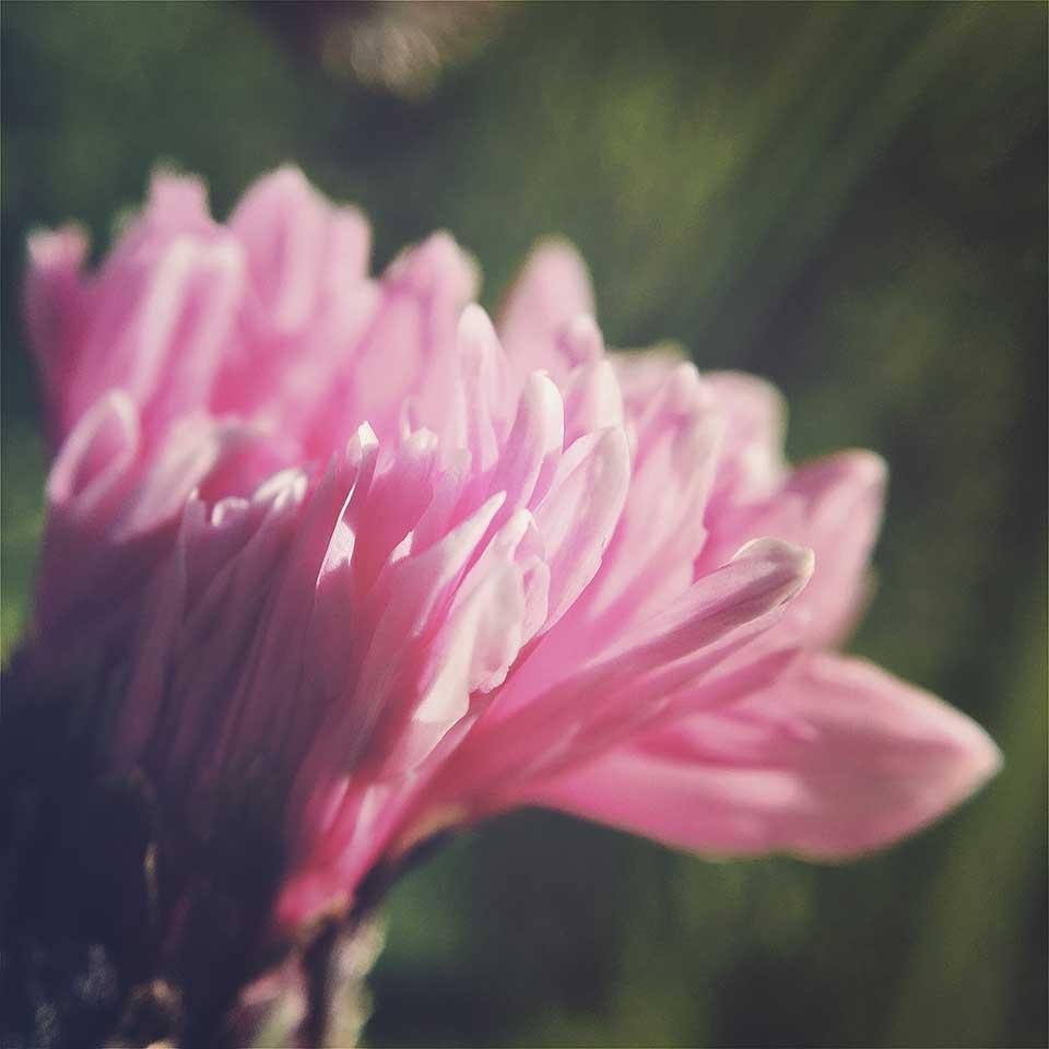 Kristiina-Hakovirta-Flowers-18