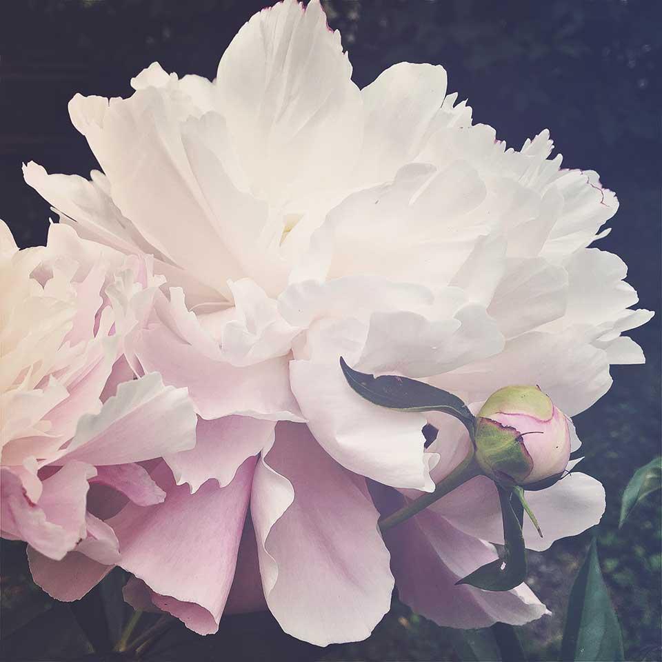 Kristiina-Hakovirta-Flowers-21