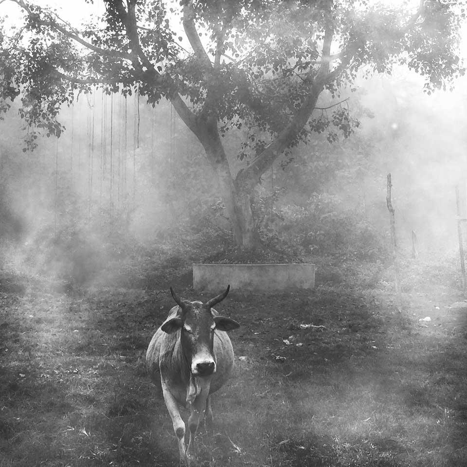 ⬆︎ Sanjay Sahani