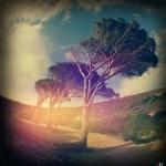 simonce_c2_dreaming-sardinias-wind