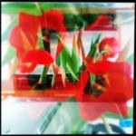hipstaclass_tom_choinski_009_mex_atwell
