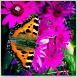 david_bithell_portfolio_11