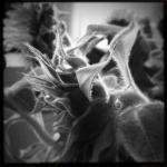 marie_raffalli_portfolio_07