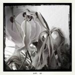 marie_raffalli_portfolio_15