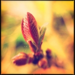 patricia_truchses_portfolio_18
