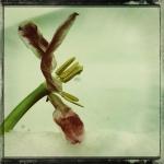 therese_cherton_portfolio_hipstamatic_fleurs_008