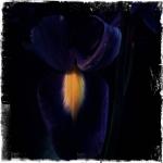 therese_cherton_portfolio_hipstamatic_fleurs_012
