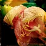 therese_cherton_portfolio_hipstamatic_fleurs_015