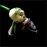 therese_cherton_portfolio_hipstamatic_fleurs_017
