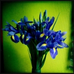 therese_cherton_portfolio_hipstamatic_fleurs_018