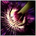 david_brown_flower_1408