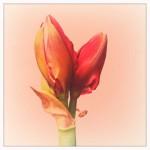 dani_salvadori_flower_01
