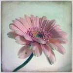 dani_salvadori_flower_09