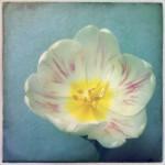 dani_salvadori_flower_19
