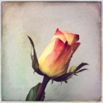 dani_salvadori_flower_21