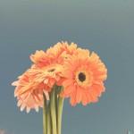 vanessa_ray_flower_04