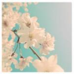 vanessa_ray_flower_06