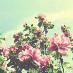 vanessa_ray_flower_12