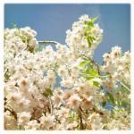 vanessa_ray_flower_14