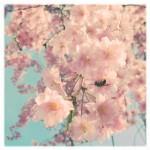 vanessa_ray_flower_16