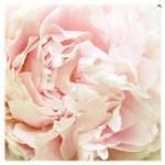 vanessa_ray_flower_18