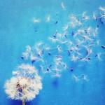 vanessa_ray_flower_19